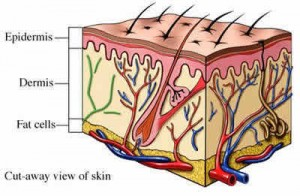 Exfoliate Skin Layers